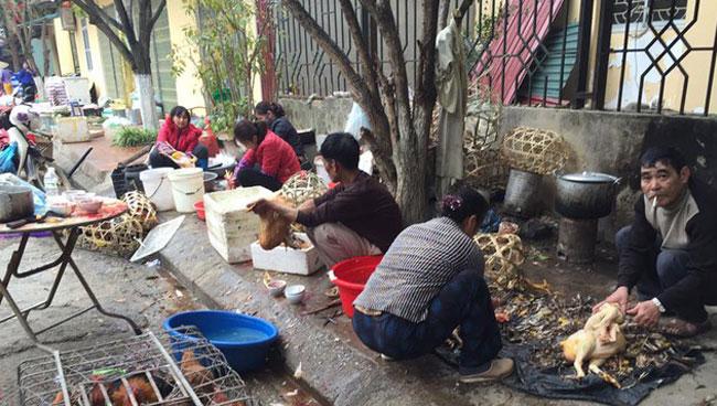 Vặt lông gà vịt bằng tay cần thuê nhiều người